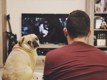 Man watching TV while pug looks at camera