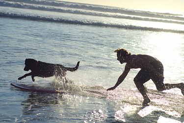 Dog and man with surfboard