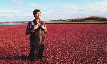 Man in waders standing in cranberry bog