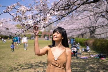 Asian woman looking at cherry blossoms in public park