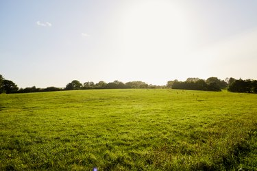 Meadow, blue sky and sunlight in summer