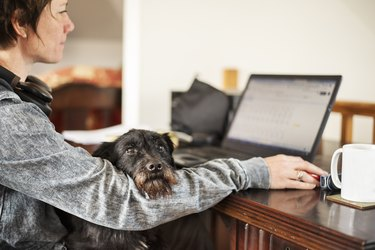 Woman using a laptop with her dog sitting on her lap