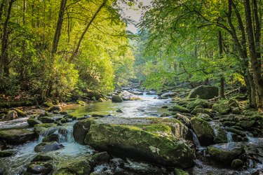 Stream Flowing through Forest in Tennessee