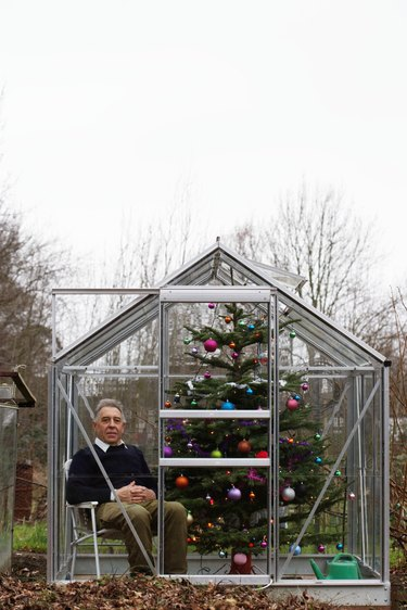 Senior man sat in greenhouse with decorated Christmas tree, portrait