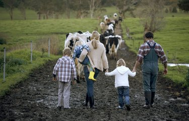 Family with three children (3-9) walking on muddy road, cows in background, rear view