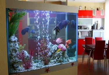 Aquarium in the house