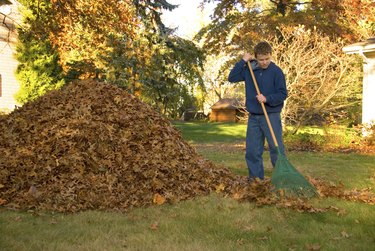 Raking Leaves Teen Boy in Blue Sweatshirt