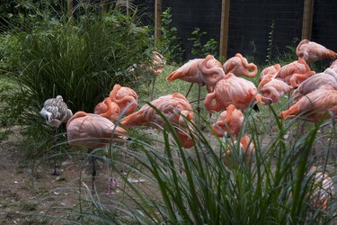 flamingo us dc zoo