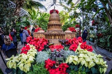 botanical garden in winter