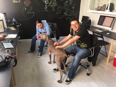 Two employees in a hip office petting a Weimaraner