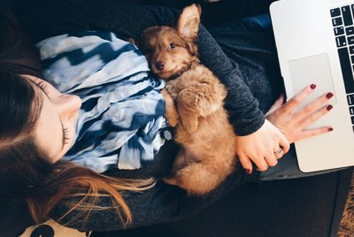 Puppy laying on girls arms while working on the computer