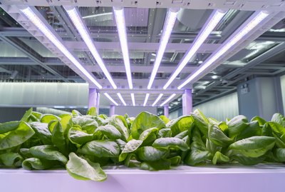 Organic hydroponic Brassica chinensis vegetable grow with LED Light Indoor farm,Agriculture Technology