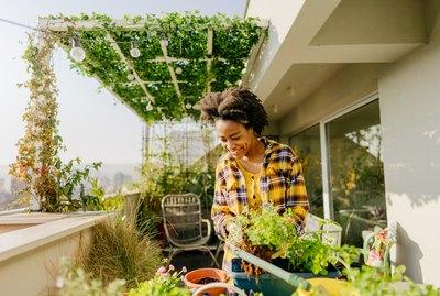 Taking care of my urban garden