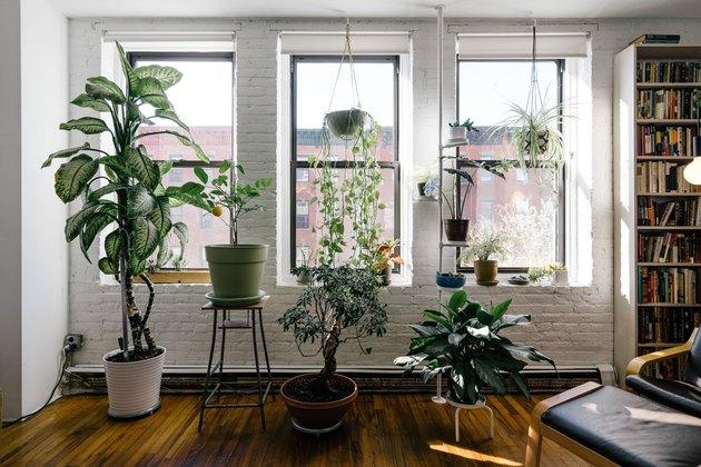 Indoor garden in Brooklyn apartment