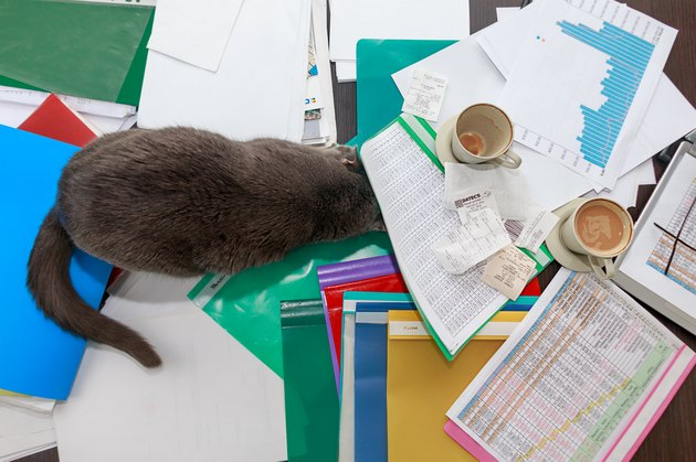 A cat is making a mess on a desk with documents