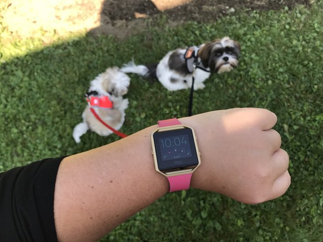 POV shows off FitBit watch above two small dogs on leashes