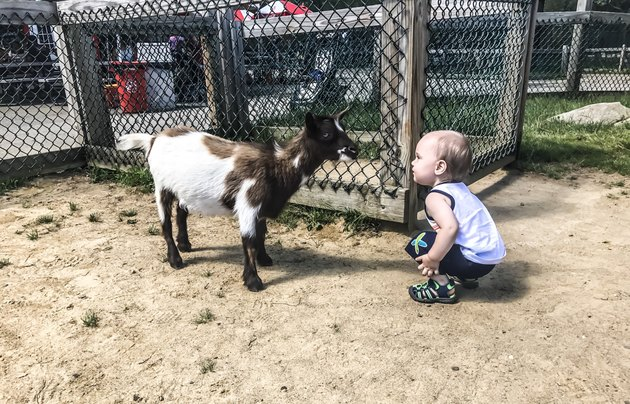 Young child squatting eye to eye with a goat