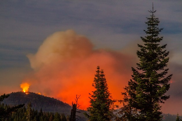 Scenic view of California wildfire in forest