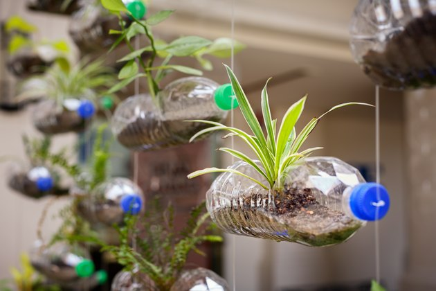 Empty plastic bottles use as a container for growing plant