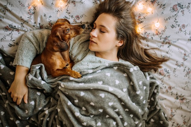 Enjoying Christmas Morning With Her Beautiful Dachshund in Bed