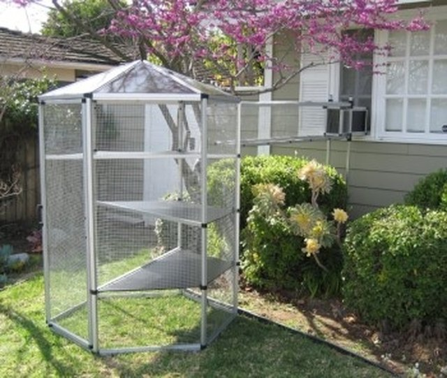 How To Buy An Outdoor Cat Enclosure Cheap Sapling Com